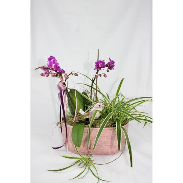 Pflanze Orchidee
